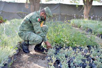 Ejército se suma a labores del Vivero Municipal