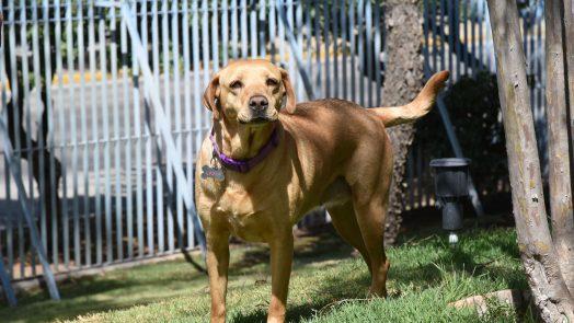 Anuncia municipio campaña de esterilización para perros y gatos