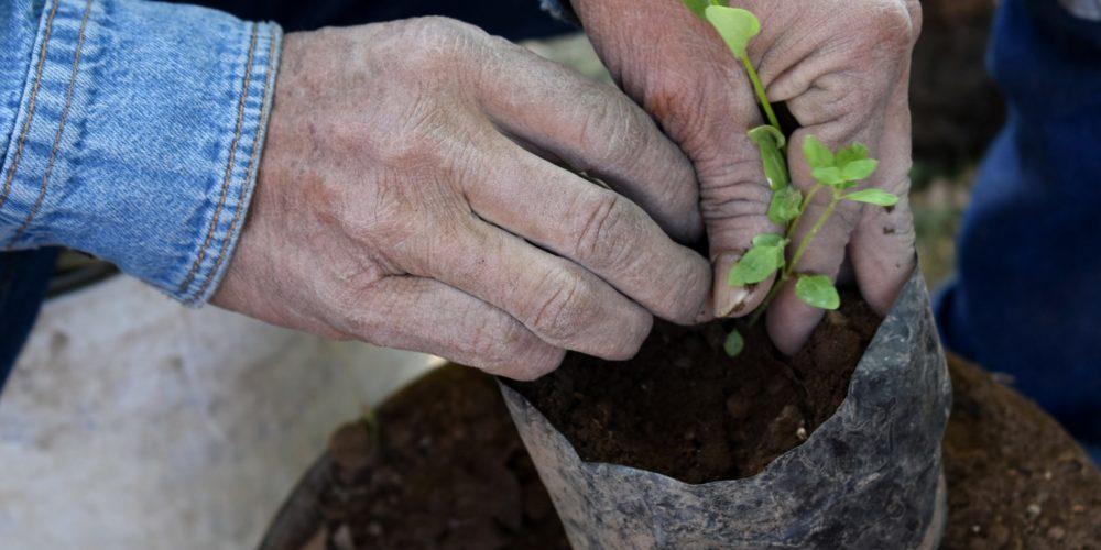 Vivero municipal de Aguascalientes producirá más de 200 mil plantas este año