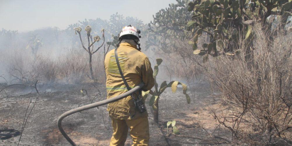 (Video)Sofocan incendio en Bosque de los Cobos