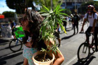 Legalización de marihuana por intereses económicos: PAN