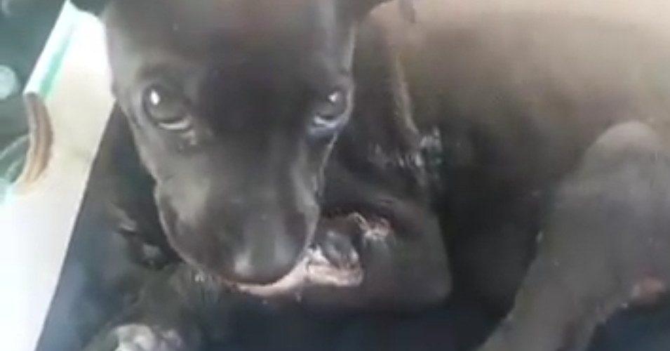 (Video)Queman a cachorro con químicos en la Palomino Dena