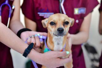 Arranca municipio con campaña de esterilización canina y felina