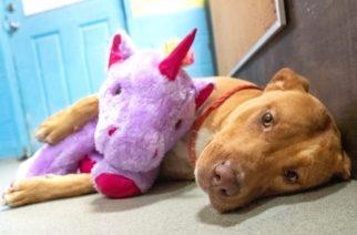 (FOTOS) Perro robó cinco veces el mismo peluche hasta que se lo compraron