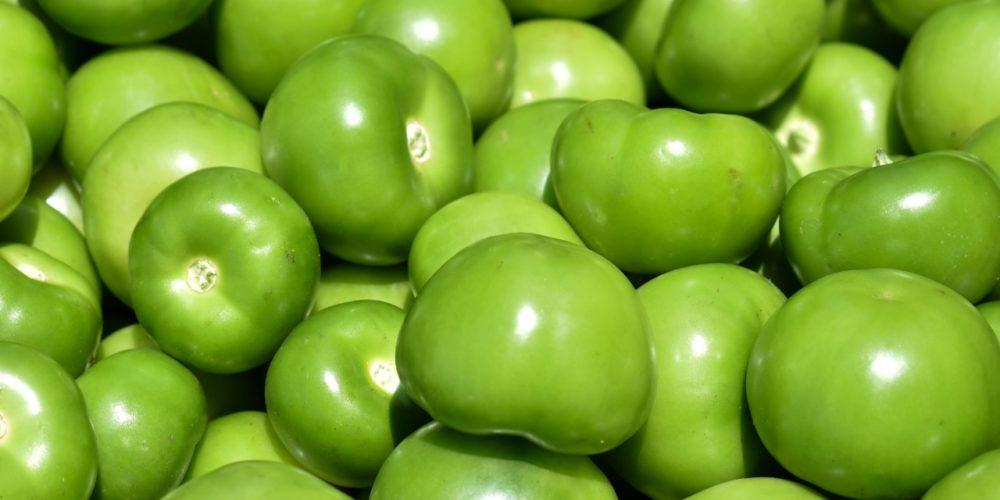 Inicia cosecha de tomatillo en Aguascalientes