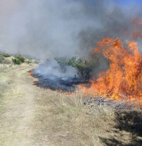 Se elevan a más de 900 las hectáreas consumidas por incendios forestales