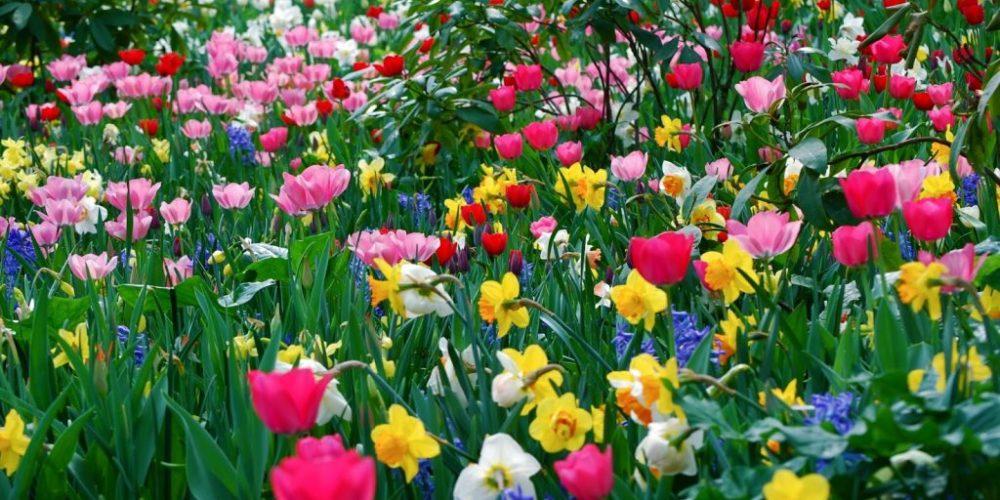 Este es el significado de las flores según su color