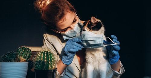 Rusia elabora la primer vacuna Covid-19 para perros, gatos y otros animales