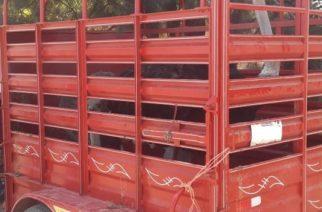 Aseguran avestruces que eran trasportadas sin documentación