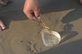 Veracruz: bañistas encuentran implante en la playa y lo confunden con medusa