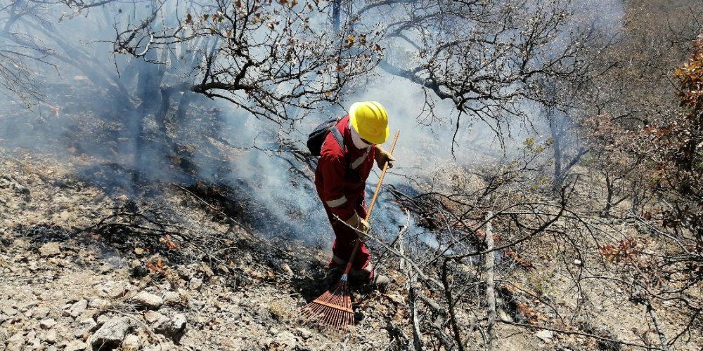 Calor y sequía aumentan número de incendios forestales en Aguascalientes