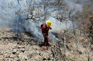 Supera los 30 incendios forestales Aguascalientes