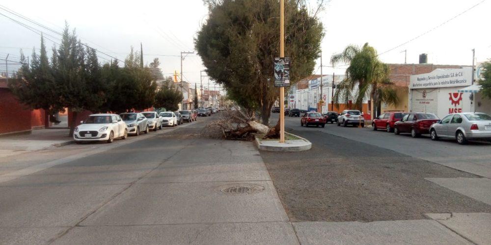 Fuertes vientos derriban árboles en Aguascalientes