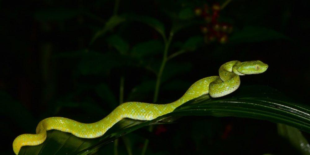 Investigadores de la UAA realizan trabajos sobre el desarrollo de las serpientes