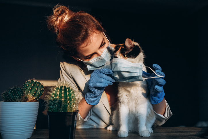 Crop of young blonde girl wearing medical mask to cat. Serious woman caring about health her pet. Concept of health protecting