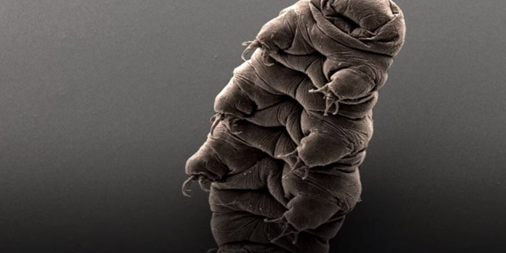 NASA envía seres microscópicos y calamares bebé al espacio