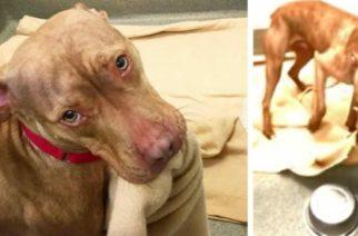 (Video)Perrito en adopción tiende su cama para conseguir una familia