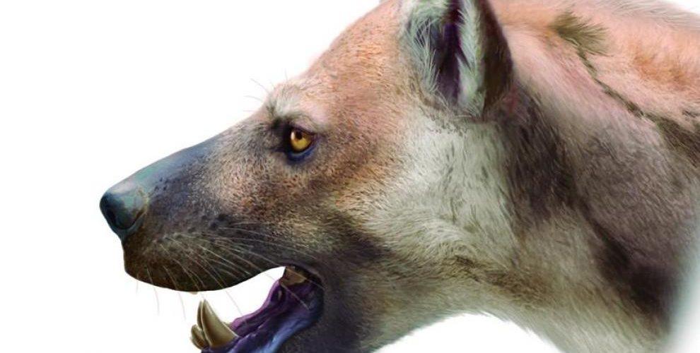 Investigadores descubren restos de un oso-perro que vivió hace 9 millones de años