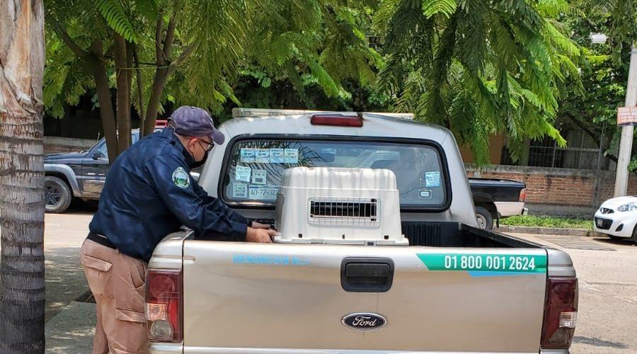 Sancionará Proespa crueldad en contra de dos gatos