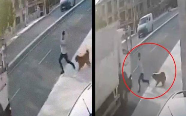 (VIDEO) Perro ladra y asusta a peatón. El hombre terminó atropellado
