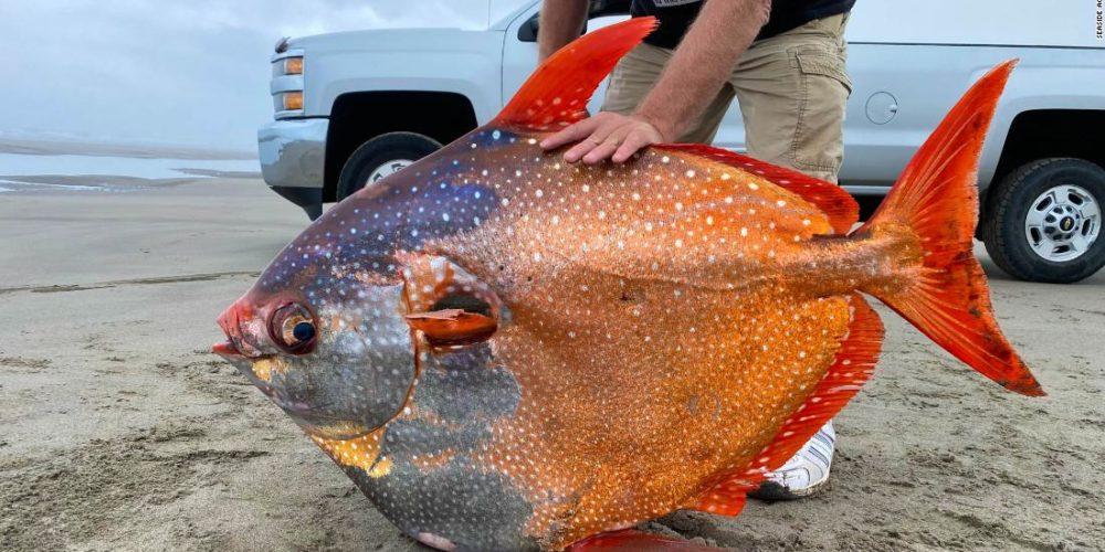 Encuentran pez Opah de 45 kilos en Estados Unidos