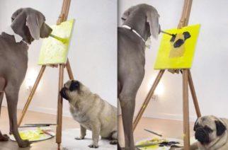 Perro gran danés pinta a su amigo pug y se vuelve viral