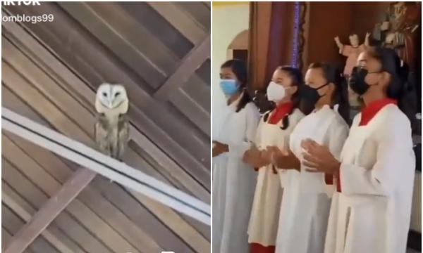 "(VIDEO) En iglesia cantan para ahuyentar a lechuza; ella ""baila"" y se hace viral"