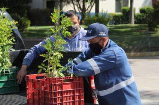Continúa donación de árboles y plantas en el vivero municipal