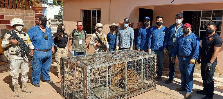 Aseguran a sicarios un rancho con tigres de bengala, autos exóticos y armas