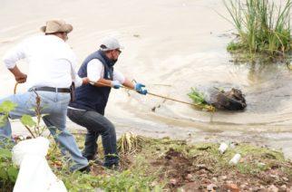 Ayuntamiento de la capital participa en movimiento mundial de limpieza
