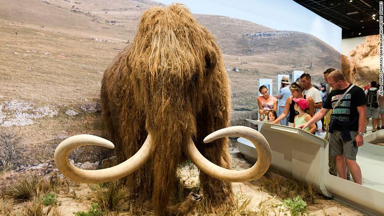 """Empresa de biociencia busca """"revivir"""" a extinto mamut lanudo"""